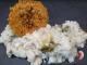 risotto thym citron brocoli a la sole et sa tuile de parmesan Thermomix