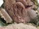 gigot d'agneau basse température au thermomix tm6